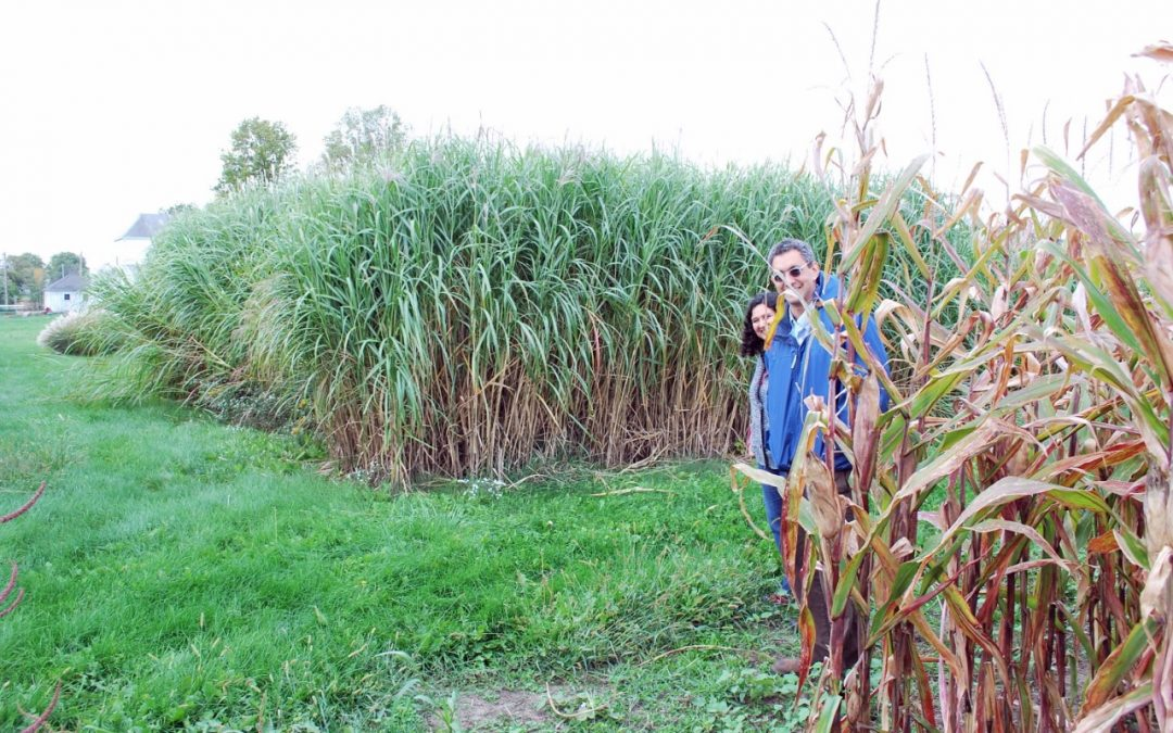 CABBI Team Sequences Miscanthus Genome