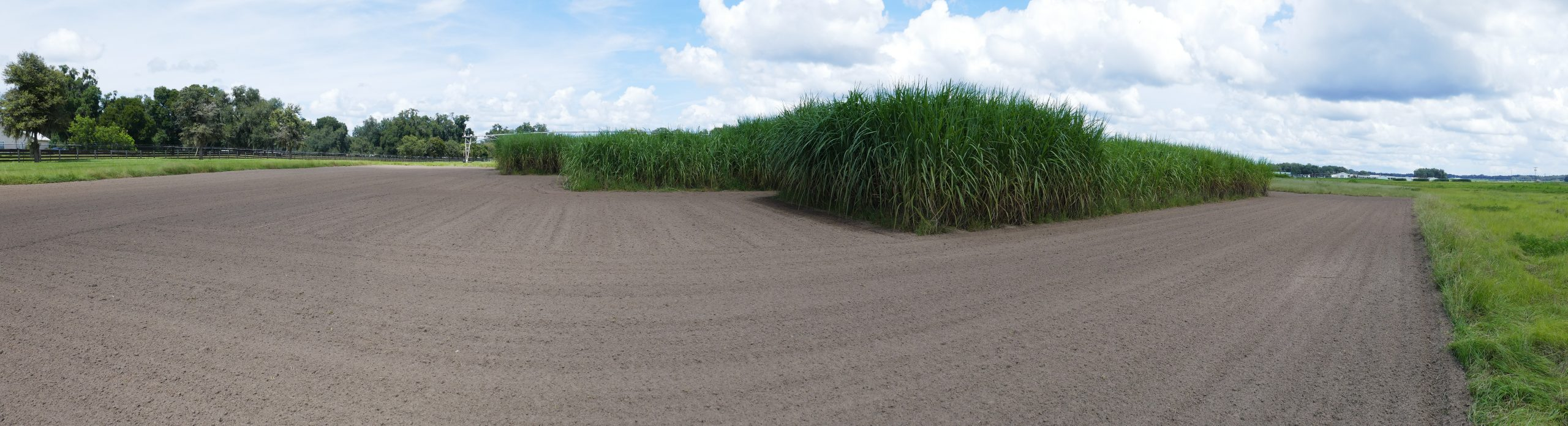 CABBI oilcane plots at the University of Florida - IFAS Plant Science and Education Unit near Citra, FL.