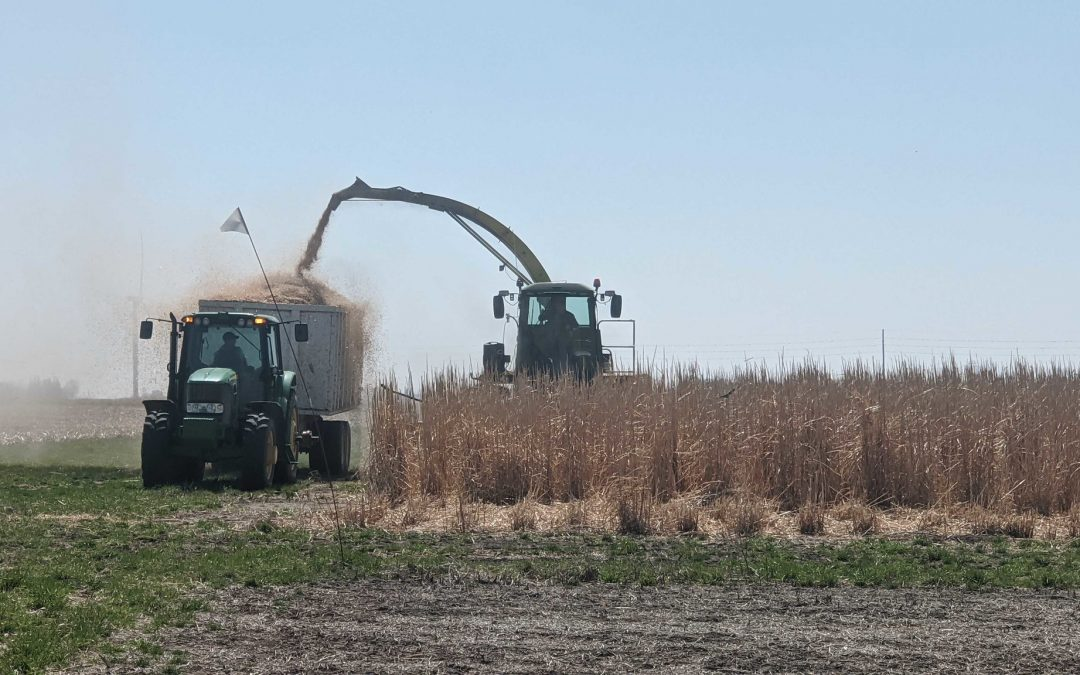 Incentives Could Turn Costs of Biofuel Mandates into Environmental Benefits