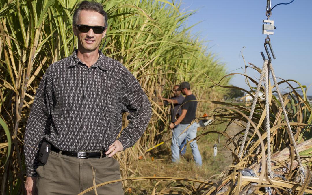 Sweet Success: CABBI Demonstrates First Precision Breeding of Sugarcane With CRISPR/Cas9